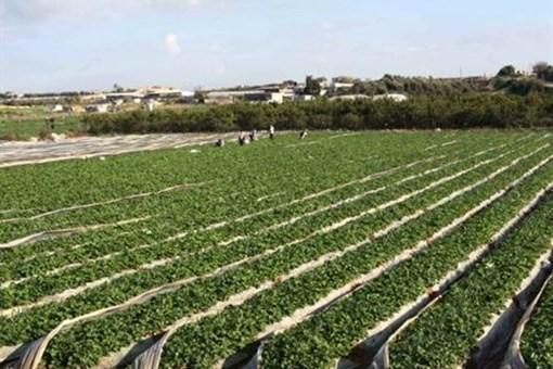 Tarımsal araziler miras ve satış ile bölünemeyecek