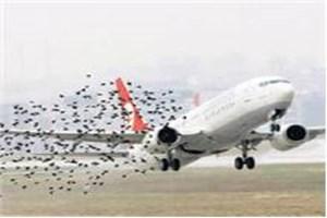 Üçüncü Havalimanı inşaatında  'Kuş' hassasiyeti!