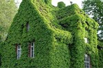 Bahçem yok diye üzülmeyin! İşte binalarda bahçe tasarımı