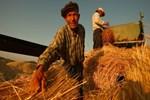 Çiftçilere destek ödemesi yarın başlıyor