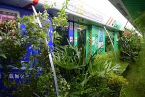 Çin'de sıradışı bir yer! Botanik değil burası metro