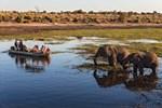 Kalari Çölü'nün yeşil şehri Botsvana