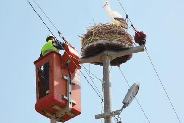 BEDAŞ'tan kuşlara özel dinlenme tesisi