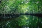 İşte huzur bulacağınız dünyanın en ünlü doğa parkları!