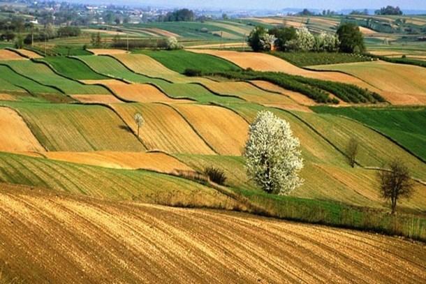 Hazine'ye ait tarım arazilerine doğrudan satış yolu!