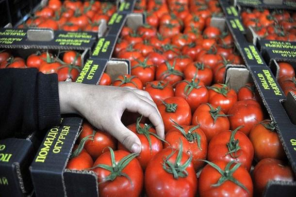 Rusya domates için tarih verdi!