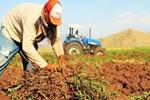 Çiftçilere 918 milyon TL'lik destek ödemesi!