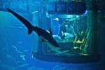 Köpek balıklarıyla çevrili otel odası: Aquarium de Paris