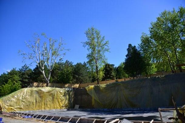 Çınar ağacı için 2,5 milyon liralık proje değişti