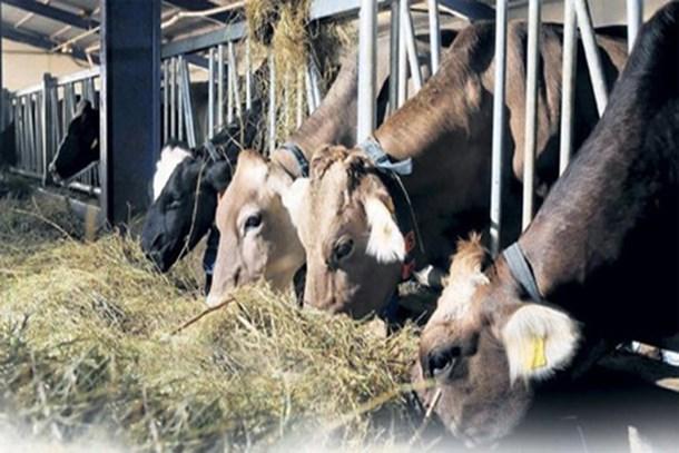Etin fiyatı 9 TL inecek