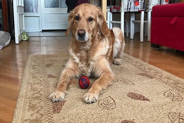 Apartmanda köpek bakımıyla ilgili Yargıtay'dan karar!