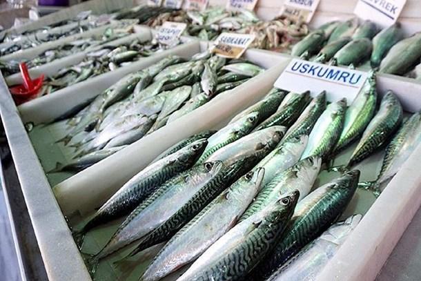 'Kırmızı etteki tehlike balıkta da var'